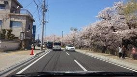 日本自駕遊全攻略_2