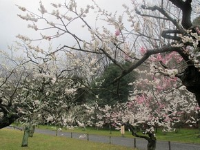 2012年京阪之旅Day 2_Pic24