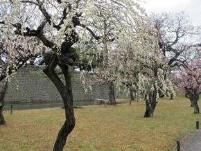 2012年京阪之旅Day 2_Pic28