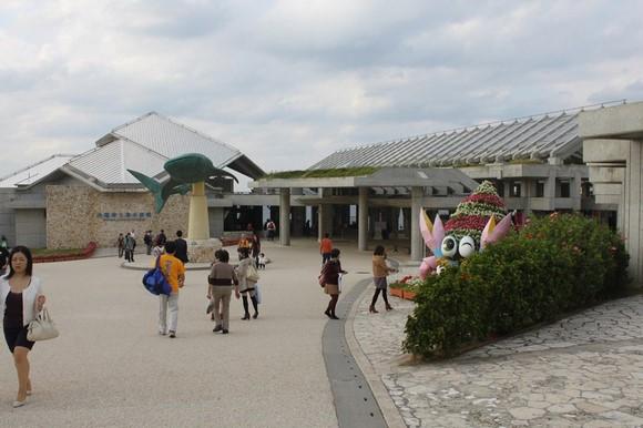 沖繩美麗海水族館_圖1