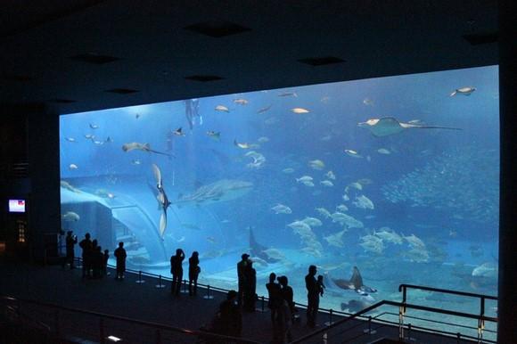 沖繩美麗海水族館_圖8