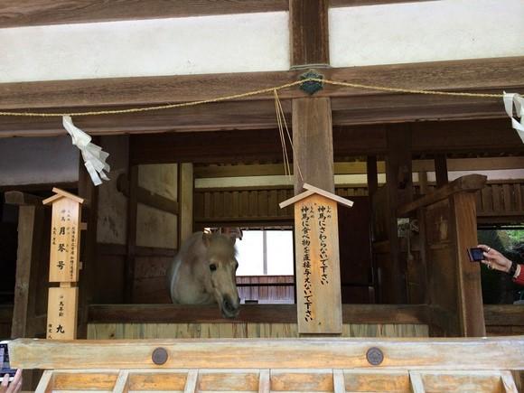 2014年環瀨戶內海自駕遊_Day3_116