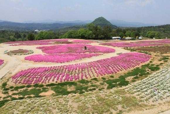 2014年環瀨戶內海自駕遊_Day6_18