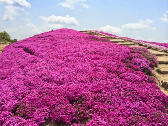 2014年環瀨戶內海自駕遊_Day6_28
