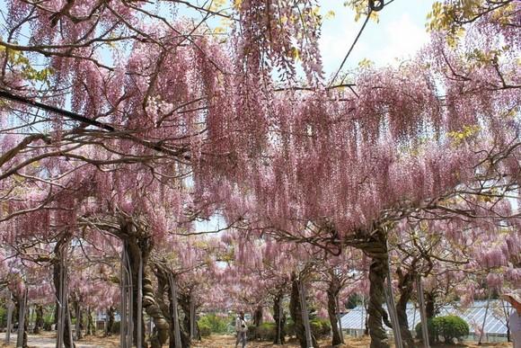 2014年環瀨戶內海自駕遊_Day6_45