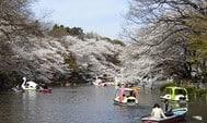 2008年東京春季賞櫻+溫泉之旅