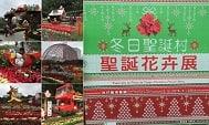 澳門龍環葡韻「冬日聖誕村」聖誕花卉展