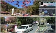 台灣武陵農場賞櫻攻略:國光客運購票與乘車經驗分享