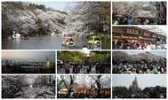 東京賞櫻之旅:一次看遍東京各大櫻花勝景